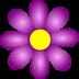 violet-flower-md
